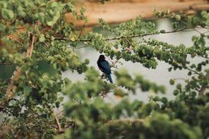 Wildlife Photo of a Bird
